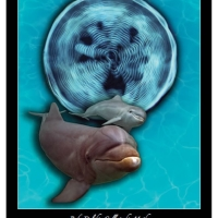 Dolphinposter